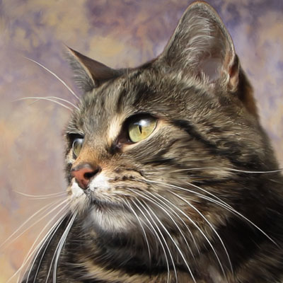 Smokey - Tiger Barn Cattery Guest