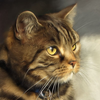 Mallie - Tiger Barn Cattery Guest