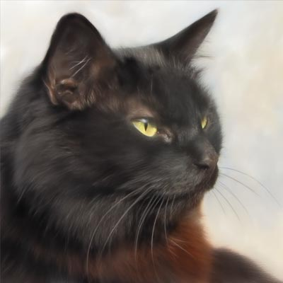 Archie - Tiger Barn Cattery Guest