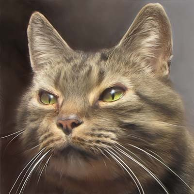 Roddy - Tiger Barn Cattery Guest